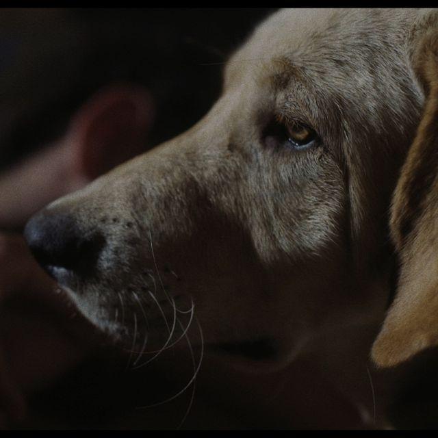 L'homme au chien de Kamal Lazraq