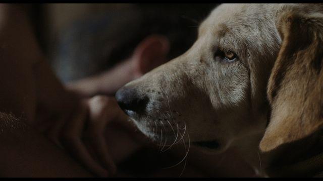 L-Homme-au-chien-Kamal Lazraq1