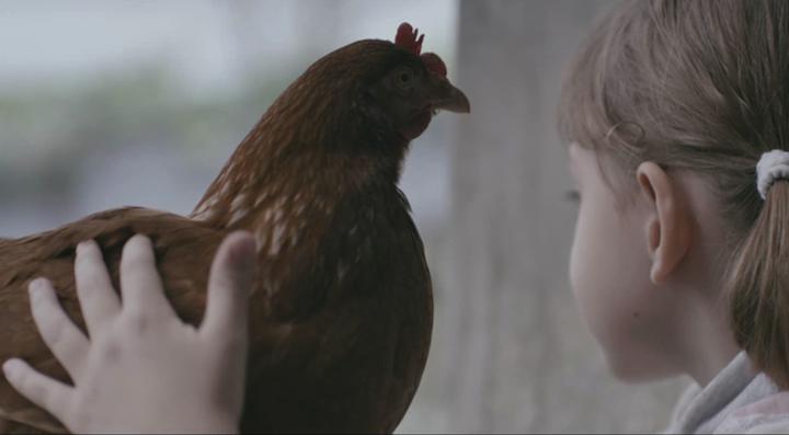 the-chicken