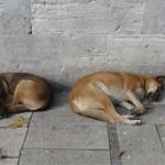 H comme Histoire de chiens